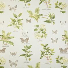 Curtains - Prestigious Textiles - Botany Acacia - Pencil Pleat, Eyelet, Tab Top for sale online Conservatory Chairs, Stuart Graham, Sanderson Fabric, Prestigious Textiles, Made To Measure Curtains, Roman Blinds, Curtain Fabric, Fabric Samples