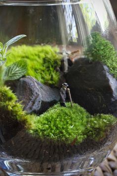 Wandering Man Terrarium by Josh Leo.  This is wonderful!