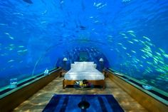 The Maldives. This is the underwater room at the Hilton. Wow.