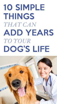 Must know these! Simple, but we forget. http://theilovedogssite.com/10-simple-things-that-could-add-years-to-your-dogs-life/
