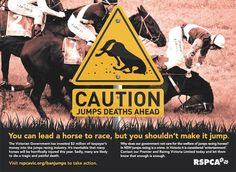 """Magnificent beautiful horses killed...and for what??..... In the name of """"sport""""??.....Shame on us!!"""