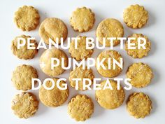 PEANUT BUTTER + PUMPKIN DOG TREATS