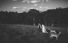 Black&White. Deer. Commitment. Fields.