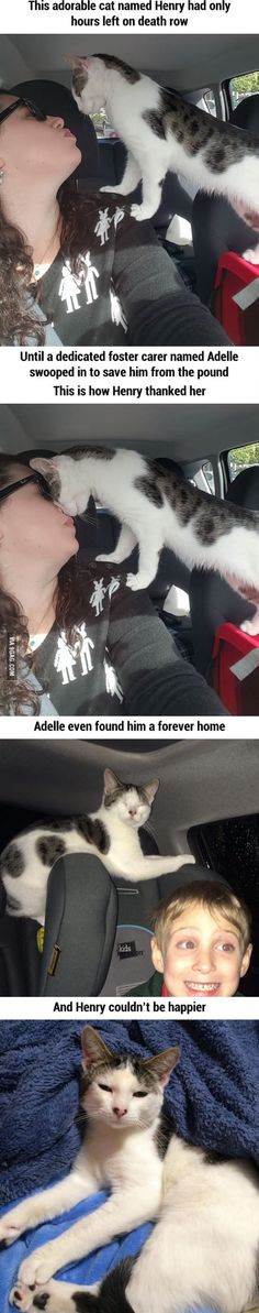 The way this cat thanks the rescuer on their way home is way too cute!
