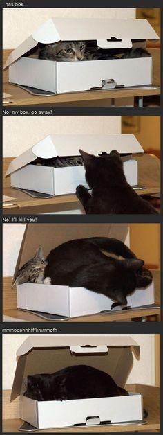 I Has Box…