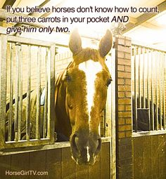 If you believe horses don't know how to count, put three carrots in your pocket and give him only two. #TackUpTruths at HorseGirlTV