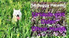 Undercover Labrador – Husky on Tour