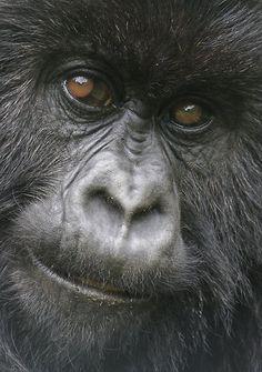 Monkey - good image