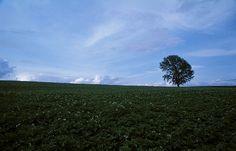 Biei, Hokkaido - philosophy tree
