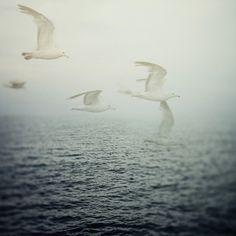 Ocean Photography Birds Seagulls Nautical by EyePoetryPhotography