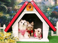Three Dogs Doghouse