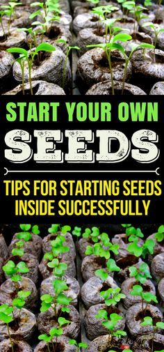 Gardening Indoors: Learn how to start your own plants from seed for your garden with these 5 seed starting tips. | Vegetable Gardening Tips | Organic Gardening | Vegetable Gardening for Beginners