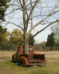 An abandoned old truck now has a tree growing through it as if to say life goes on. A pecan tree. Reminds me of my father's truck and of course with a pecan tree growing in it is as symbolic as it gets! Abandoned Buildings, Abandoned Houses, Abandoned Places, Abandoned Vehicles, Vintage Trucks, Old Trucks, Pickup Trucks, Big Chevy Trucks, Lifted Trucks