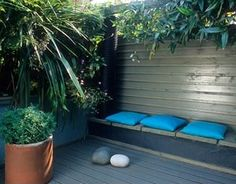 Small town courtyard garden with decking, tropical style planting and built in bench. Cordyline australis in terracotta pot, Clematis armandii growing on fence. Alistair Davidson, Worcester, UK
