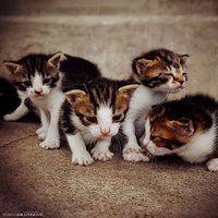cute army