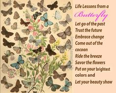 Life lessons from a butterfly...