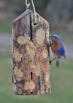 Homemade Bird Feeders, Diy Bird Feeder, Best Bird Feeders, Bird Seed Feeders, Bird House Feeder, Wild Bird Feeders, Bird Suet, Wild Birds Unlimited, Bird Houses Diy