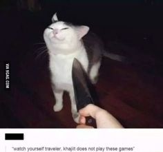 I wouldn't mess with that cat.