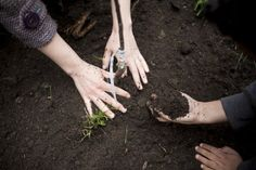 planting the trees of civic engagement