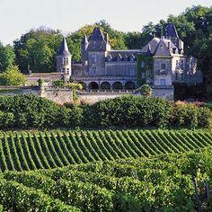 Vineyard in Saint Emilion, France