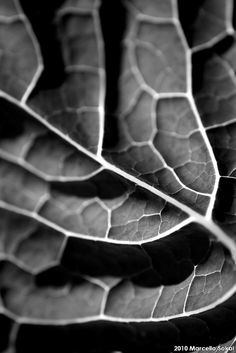 TEXTURES IN NATURE by msokal, via Flickr