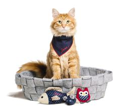 Ellen DeGeneres PetSmart collection for cats! Love it!