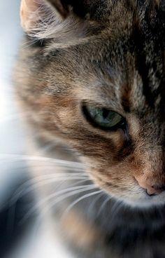Feline =^..^= Friends