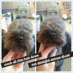 dog stuff,dog ideas,dog care,dog tips,dog grooming Dog Grooming Styles, Dog Grooming Shop, Grooming Salon, Puppy Care, Dog Care, Japanese Dog Grooming, Poodle Hair, Poodle Cuts, Creative Grooming