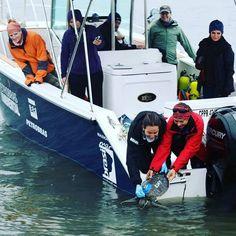 Zeta Estaleiro tem orgulho de ser parceiro da REBIMAR Programa de Recuperação da Biodiversidade Marinha. Na foto a mais nova ação em prol da conservação de tartarugas marinhas. Mais em: www.marbrasil.org #conservation #rebimar #parana #ufpr #tortue #tartarugamarinha #sustentabilidade #conservacao #fishing #fishingboat #realease #utilityboat #projetotamar #diving #coldwater #mergulho #santacatarina #florianopolis #palhoca #zetaestaleiro #marbrasil #picoftheday #gopro #goprohero #vscocam by…