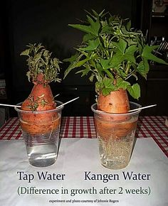 Kangen Water is awesome for your health. Did you know that Kangen Water is also awesome with vegetation? It's another reason to buy a Kangen Water Machine. www.dianahouk.com