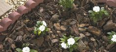 How to Landscape with Mulch - Lowe's gardening