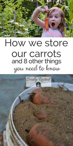 #StoringCarrots over winter | keep carrots all winter | #carrot storage | fall on the homestead | meat rabbits | barn cats | pumpkin bread recipe | #FallingForAutumn | 8 things wanna-be homesteaders need to know (in the fall) » SoulyRested