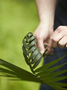 Foliage Art....Hand weaving palm leaves.