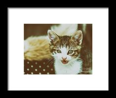 Baby Cat Meowing Framed Print