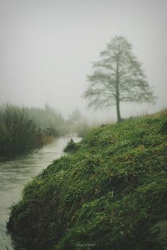 vhord: n-c-x: eartheld: sidestroke: jamesforester:I see you as the tree in the fog and I see the river of life flowing in your direction. mostly nature xx nature blog strictly nature
