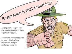 respiration picture - Google Search Science Revision, Organic Molecules, Aerobics, Equation, Google Search, Words, Equality, Horse