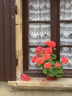 French window treatment: I would do a patterned fabric not lace