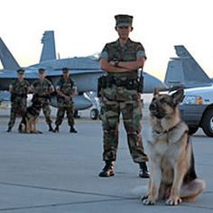 Air Force K9 #German #Shepherds #dogs - Help Us Salute Our Veterans by supporting their businesses at www.VeteransDirectory.com, Post Jobs and Hire Veterans VIA www.HireAVeteran.com Repin and Link URLs