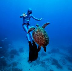 I have already swam with seaturtles in Hawaii but I need to do it again.