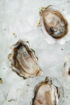 Zardetto + Oysters on the Half Shell. The oysters have a way of bringing out the sparkle in Zardetto Prosecco. Painting Inspiration, Food Inspiration, Art Inspo, Spinach Nutrition Facts, San Francisco Food, California Food, Oyster Shells, Food Photography Styling, Seafood