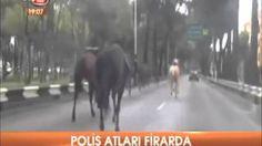 Polis atları firar etti şehir merkezinde ortalık birbirine girdi   yurttan ve dünyadan haberler ve teknoloji videoları blogu denk gelirse