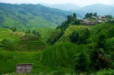 Guizhou: from Guilin to Guiyang 7 days Guiyang, Vineyard, Landscape, Day, Outdoor, Outdoors, Outdoor Games, Landscaping