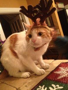 ラブリー-KittyCats、catp0rn:mirthme:シェルビーからの幸せな休日...