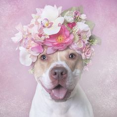 Blossom is a sweet and fun girl who loves to go outside and play.