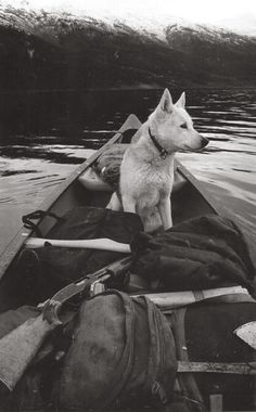 life is good~a dog and a canoe