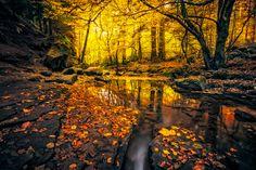 Tierra/Naturaleza Chorro  Tierra/Naturaleza Bosque Otoño Foliage Rock Fondo de…
