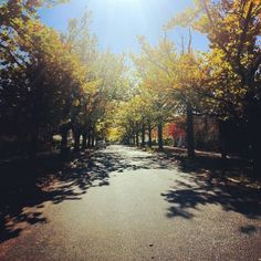 "Instagrammer sophia_brady found this ""yellow leaf road"" in Braddon, Canberra"