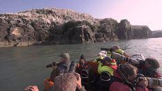 Grassholm Island Gannetry Experience Wales, Safari, Sea, Island, Board, Welsh Country, The Ocean, Islands, Ocean