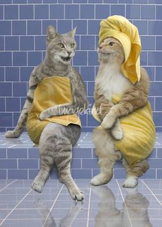 """""""Sauna Cats"""" by John Lund: Funny cat photo of two cats relaxing and gossiping in a sauna or spa. Funny Cat Photos, Funny Animal Pictures, Funny Cats, Funny Animals, Cute Animals, Crazy Cat Lady, Crazy Cats, I Love Cats, Cool Cats"""