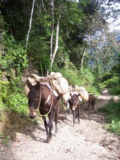 mulas con cafe - Buscar con Google